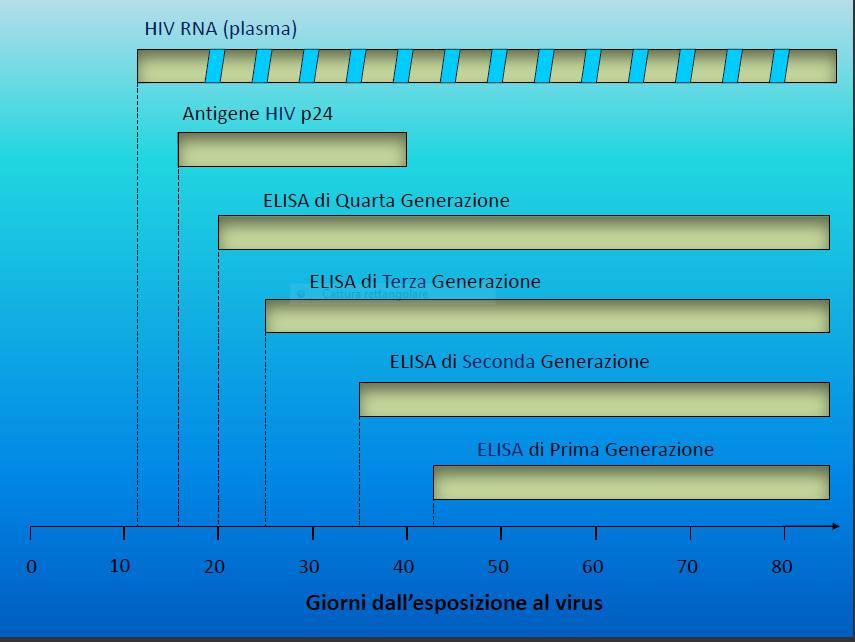 Periodo finestra rilevazione hiv - Periodo finestra hcv ...
